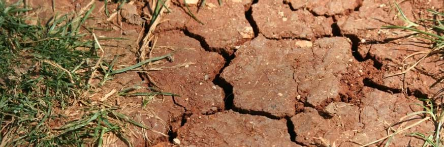 Cracked parched soil