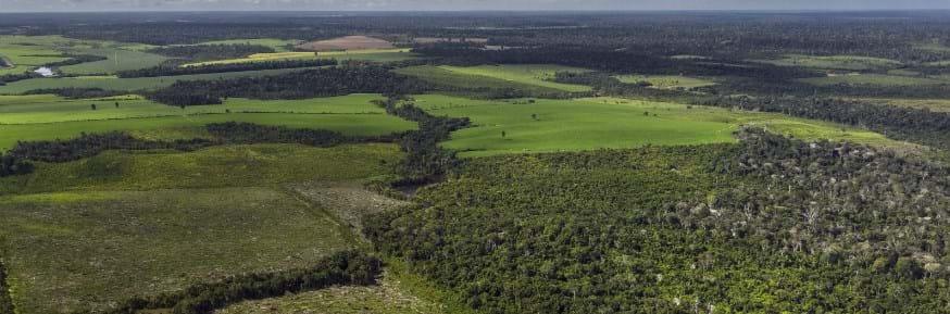 floresta secundária na Amazônia
