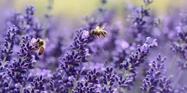 Bee-ing more friendly will help