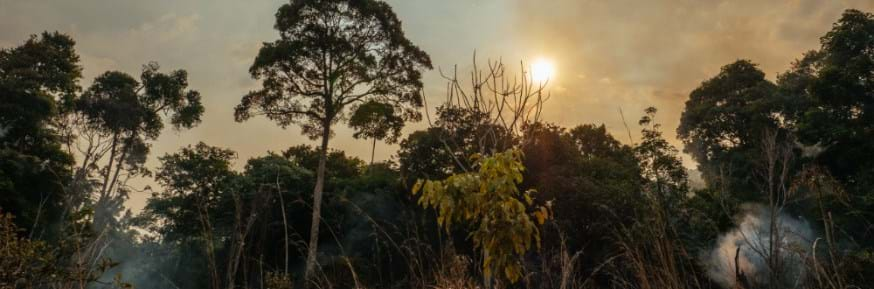 The sun rises over a fire-affected forest
