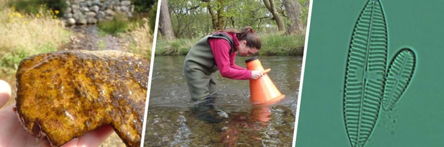 Left, yellow rock take from a river covered in biological matter; centre, Dr Maria Snell in waders standing in a river using equipment to look under the surface; right, a microscope of an oval-shaped diatom