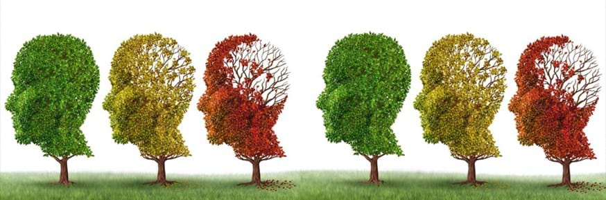 Physicists have devised a new method of investigating brain function, opening a new frontier in the diagnoses of neurodegenerative and ageing related diseases.