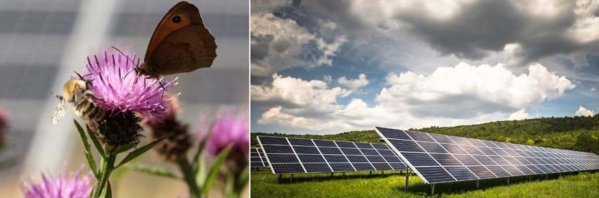 Pollinators in a solar park