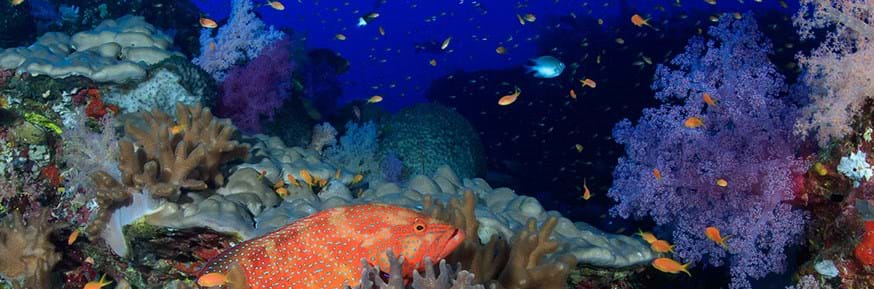 A coral reef in Sudan.