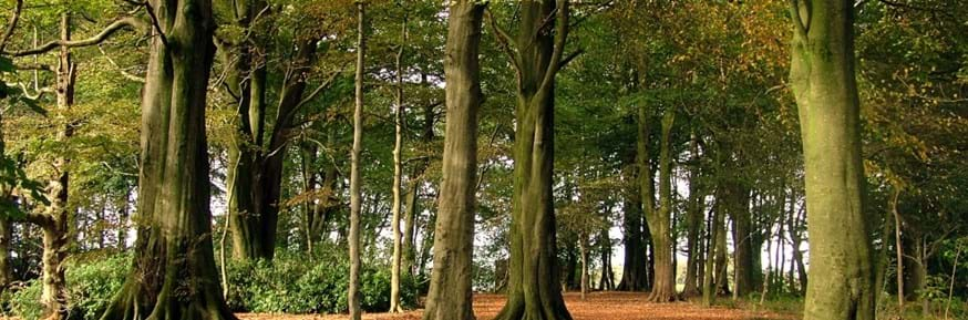 Wood with mature trees on the Bailrigg campus of Lancaster University