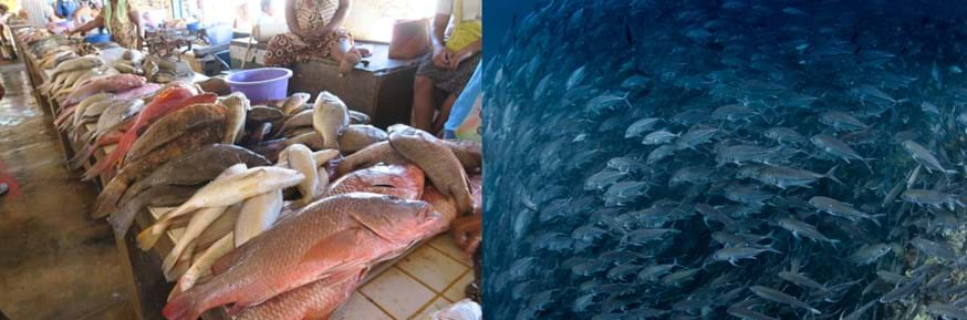 Fish in a fish market and a school of fish in the ocean