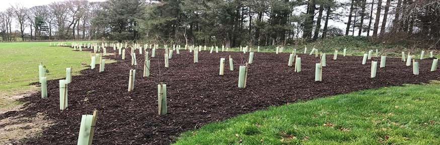 new trees planted adjacent to the Sports Centre and between HIC