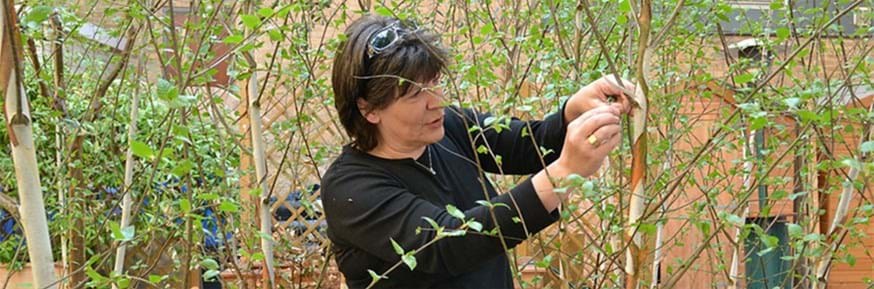 Professor Barbara Maher looking at young growing trees in an urban space