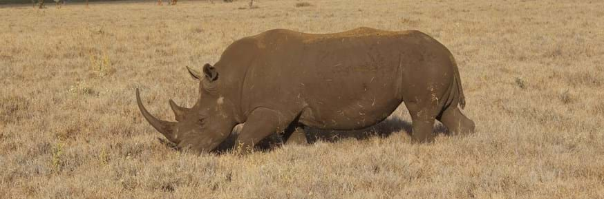 Conservation efforts in Kenya, and around the world, have been hindered by structural economic processes such as debt and austerity, further contributing to the decline of species such as rhinos