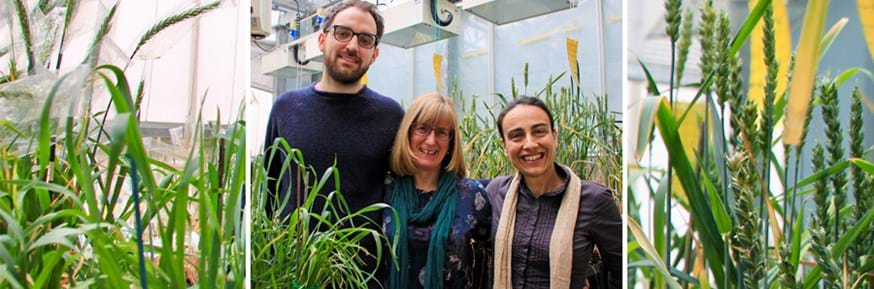 The research team among crops
