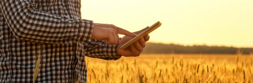A man using a smart phone in a wheat field