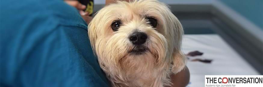 A dog visits a vet clinic.